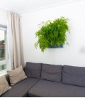 Wall Support Minigarden Vertical