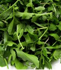 Cultivated Rocket, Minigarden Organic Seeds