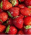 Strawberries, Minigarden Seeds