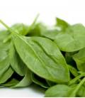 """Spinach """"Gigante de Invierno"""", Minigarden Organic Seeds"""