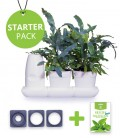 Minigarden Salads and Aromatic Starter Pack